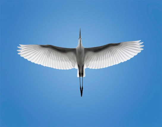 birds-flying-images-370