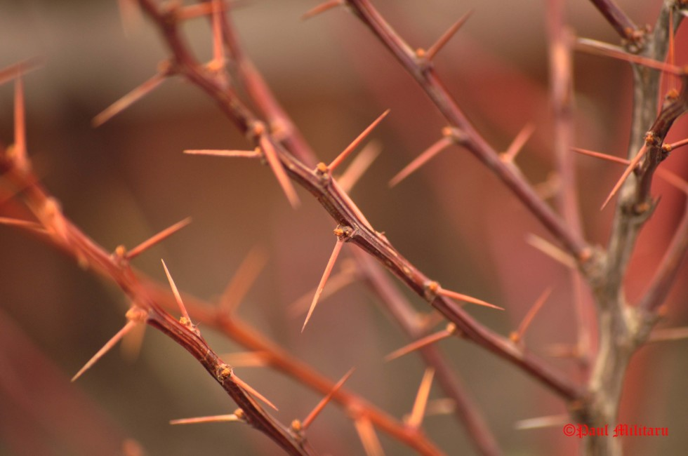 sometimes-life-can-be-so-full-of-thorns